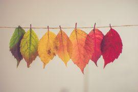 23 Eylül Sonbahar Ekinoksunun Astrolojik Etkileri Nelerdir
